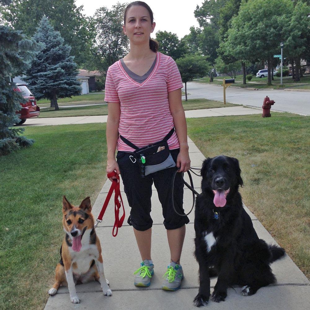 Dog Training Naperville Illinois