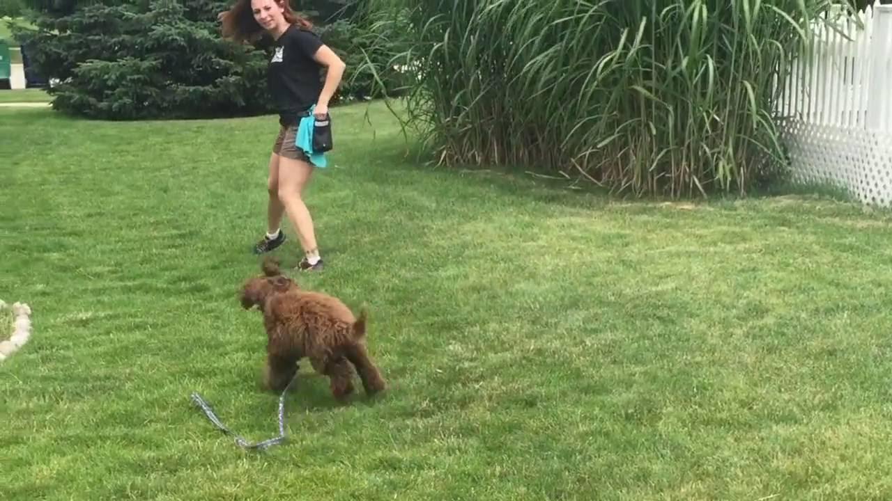 Dayton - Puppy Training