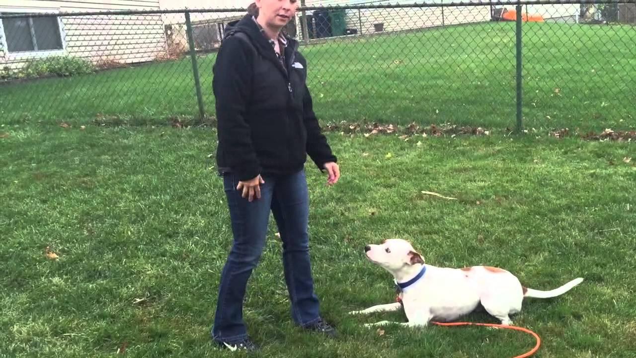 Wrigley - Puppy Training