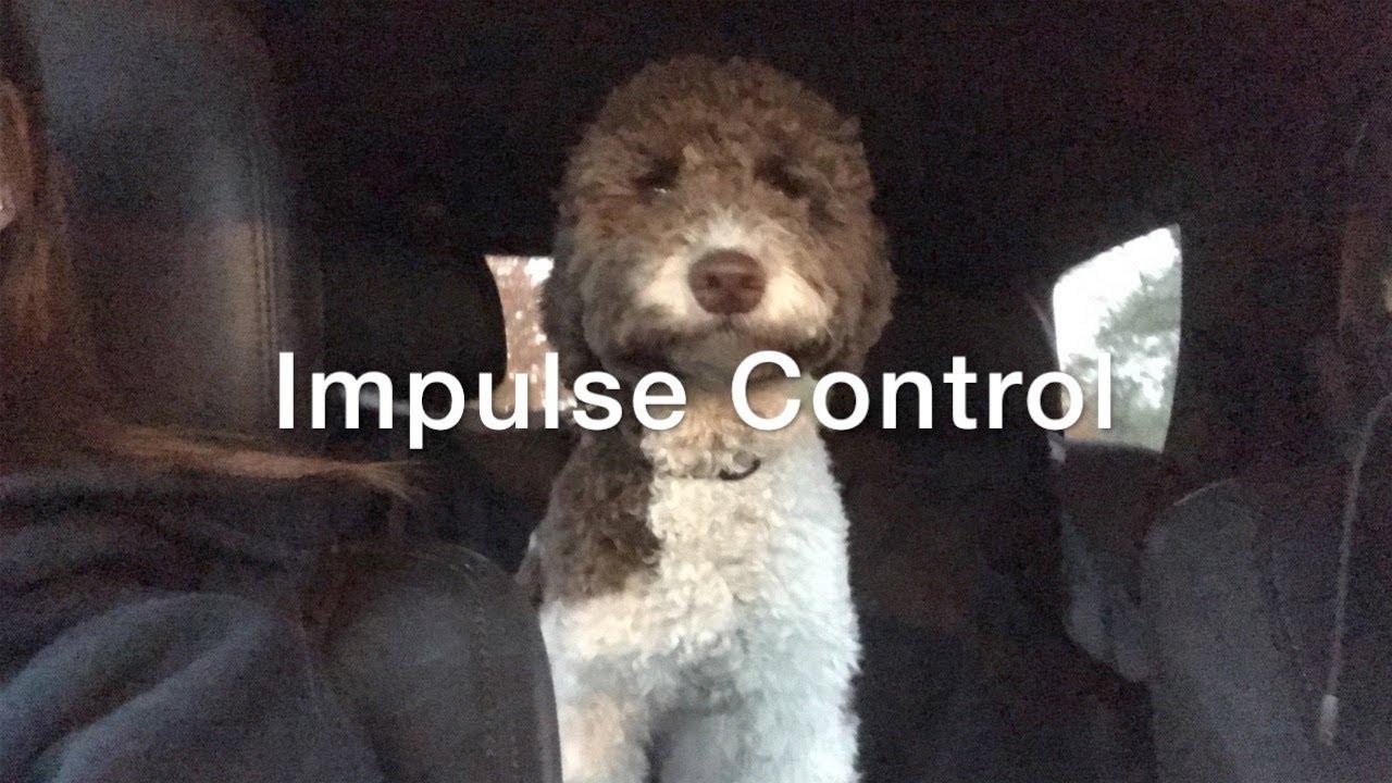 Impulse Control Video